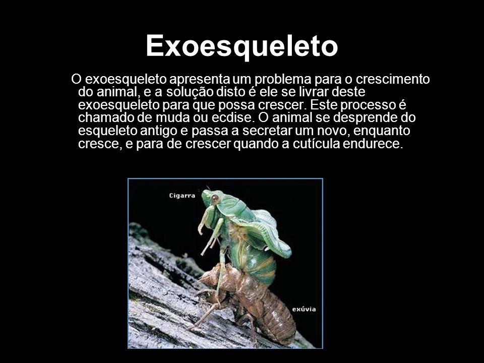 Exoesqueleto O exoesqueleto apresenta um problema para o crescimento do animal, e a solução disto é ele se livrar deste exoesqueleto para que possa cr