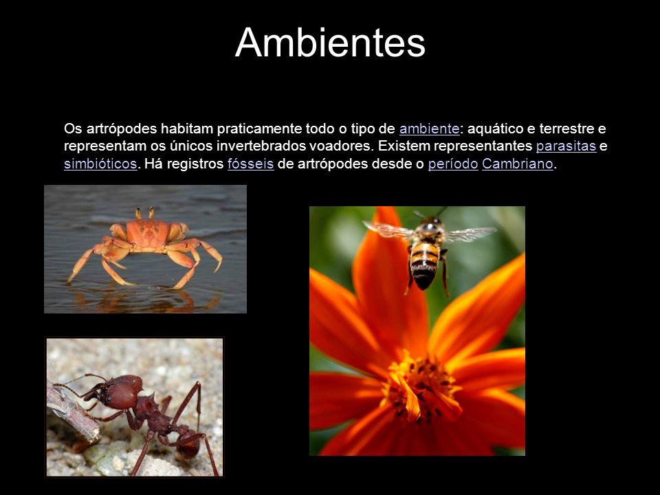 Ambientes Os artrópodes habitam praticamente todo o tipo de ambiente: aquático e terrestre e representam os únicos invertebrados voadores. Existem rep