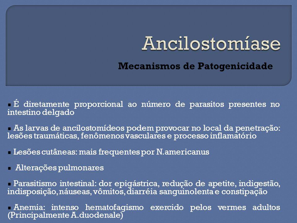 É diretamente proporcional ao número de parasitos presentes no intestino delgado As larvas de ancilostomídeos podem provocar no local da penetração: lesões traumáticas, fenômenos vasculares e processo inflamatório Lesões cutâneas: mais frequentes por N.americanus Alterações pulmonares Parasitismo intestinal: dor epigástrica, redução de apetite, indigestão, indisposição, náuseas, vômitos, diarréia sanguinolenta e constipação Anemia: intenso hematofagismo exercido pelos vermes adultos (Principalmente A.duodenale) Mecanismos de Patogenicidade