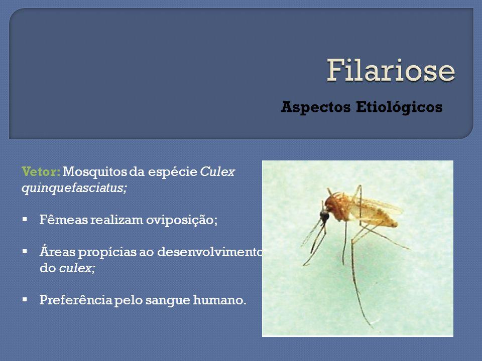 Aspectos Etiológicos Vetor: Mosquitos da espécie Culex quinquefasciatus;  Fêmeas realizam oviposição;  Áreas propícias ao desenvolvimento do culex;  Preferência pelo sangue humano.