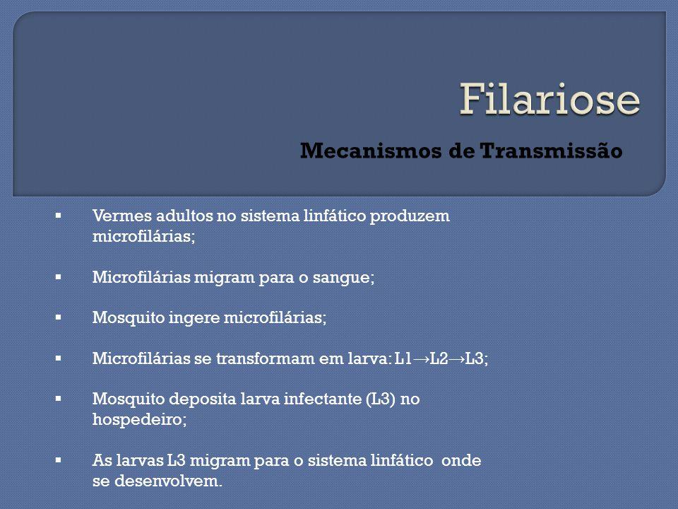Mecanismos de Transmissão  Vermes adultos no sistema linfático produzem microfilárias;  Microfilárias migram para o sangue;  Mosquito ingere microfilárias;  Microfilárias se transformam em larva: L1 → L2 → L3;  Mosquito deposita larva infectante (L3) no hospedeiro;  As larvas L3 migram para o sistema linfático onde se desenvolvem.