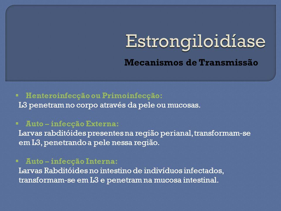 Mecanismos de Transmissão  Henteroinfecção ou Primoinfecção: L3 penetram no corpo através da pele ou mucosas.  Auto – infecção Externa: Larvas rabdi