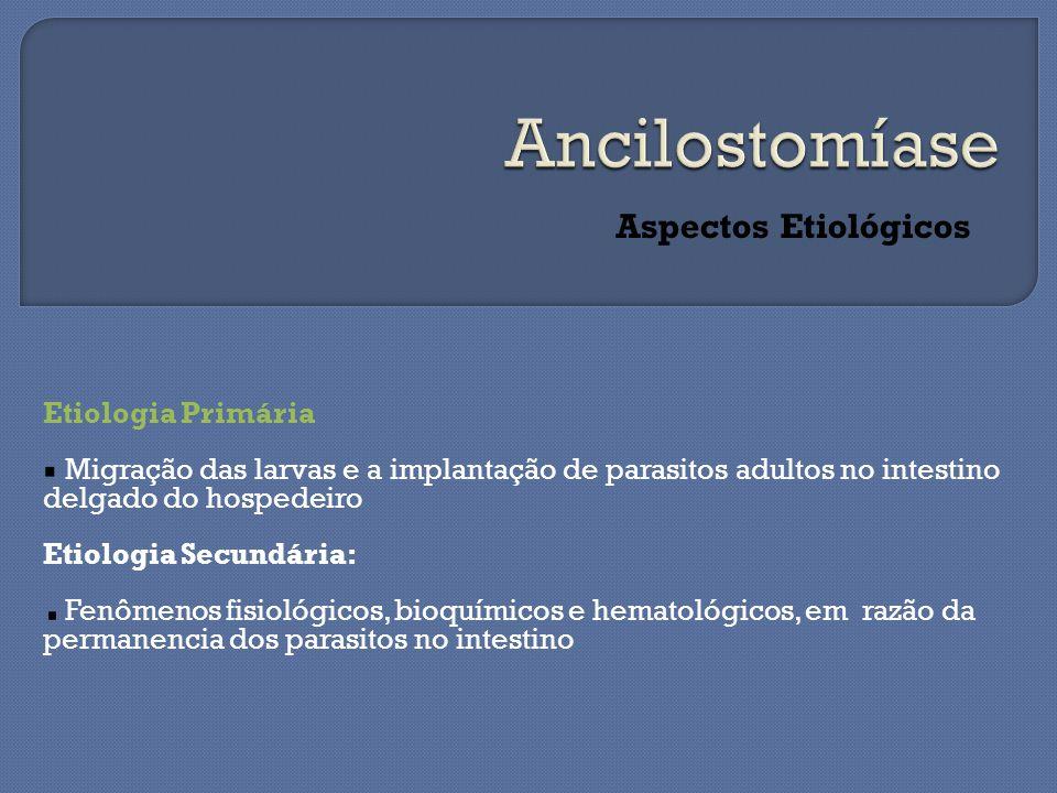 Aspectos Etiológicos Etiologia Primária Migração das larvas e a implantação de parasitos adultos no intestino delgado do hospedeiro Etiologia Secundária: Fenômenos fisiológicos, bioquímicos e hematológicos, em razão da permanencia dos parasitos no intestino
