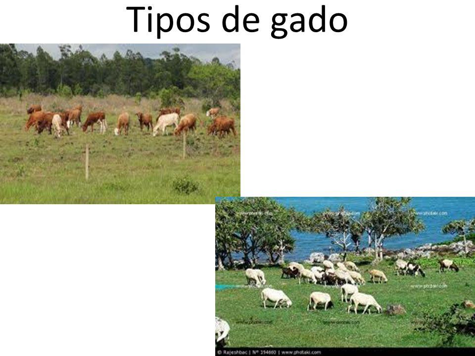 Tipos de gado