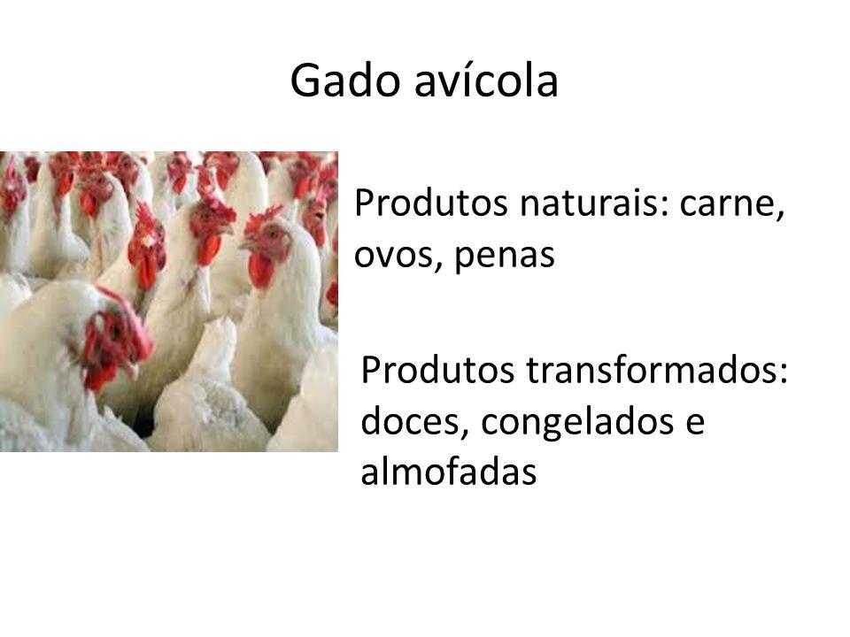 Gado avícola Produtos naturais: carne, ovos, penas Produtos transformados: doces, congelados e almofadas