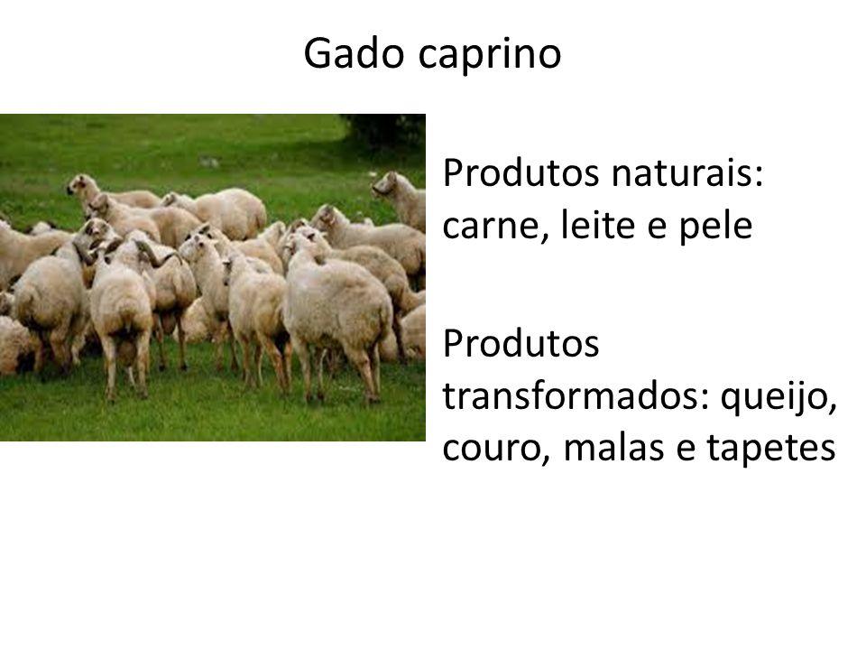 Gado caprino Produtos naturais: carne, leite e pele Produtos transformados: queijo, couro, malas e tapetes