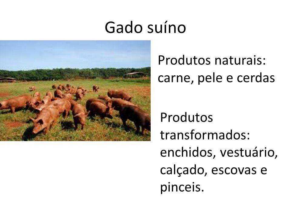 Gado bovino Produtos naturais: leite, carne e pele Produtos transformados: queijo, iogurte, manteiga, vestuário e calçado.