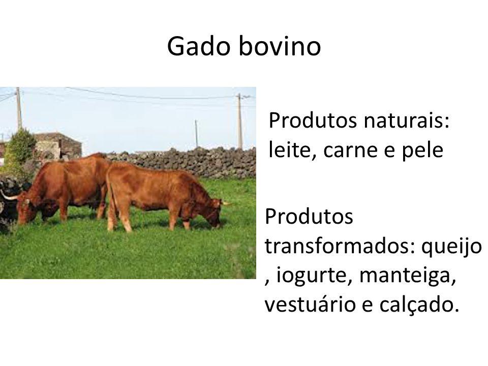 Gado ovino Produtos naturais: leite, carne e lã Produtos transformados: congelados, queijo e vestuário.
