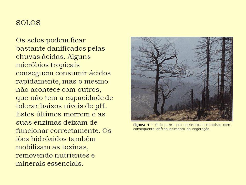 As chuvas ácidas podem retardar o crescimento das florestas vulneráveis eliminando os sais minerais do solo, comprometendo assim as plantações e a renovação da vegetação.