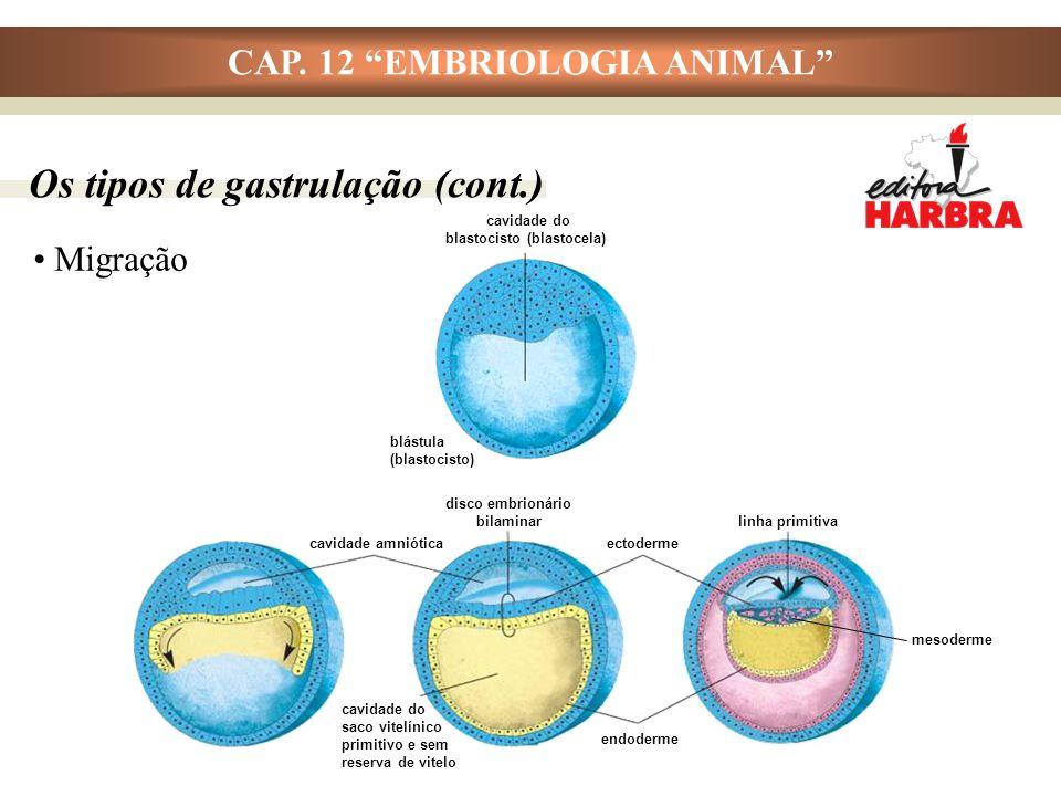 """CAP. 12 """"EMBRIOLOGIA ANIMAL"""" Migração cavidade do blastocisto (blastocela) blástula (blastocisto) Os tipos de gastrulação (cont.) cavidade amniótica c"""