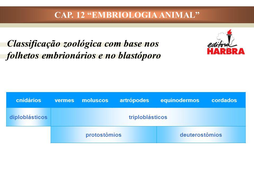 """CAP. 12 """"EMBRIOLOGIA ANIMAL"""" Classificação zoológica com base nos folhetos embrionários e no blastóporo cnidáriosvermesmoluscosartrópodesequinodermosc"""