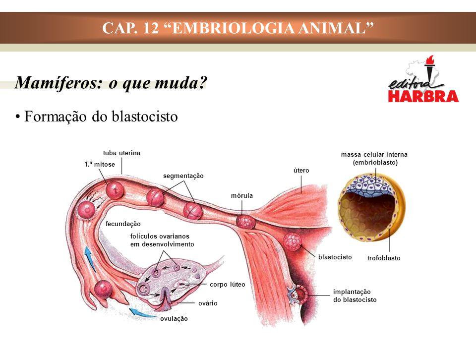 CAP.12 EMBRIOLOGIA ANIMAL Mamíferos: o que muda.