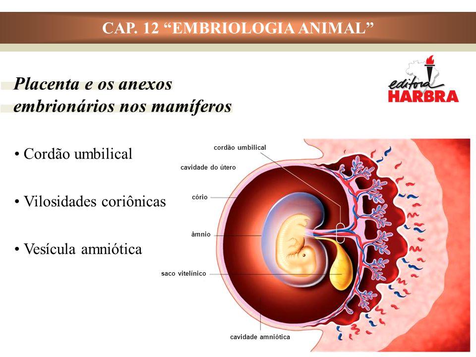 """CAP. 12 """"EMBRIOLOGIA ANIMAL"""" Placenta e os anexos embrionários nos mamíferos Cordão umbilical Vilosidades coriônicas Vesícula amniótica cordão umbilic"""