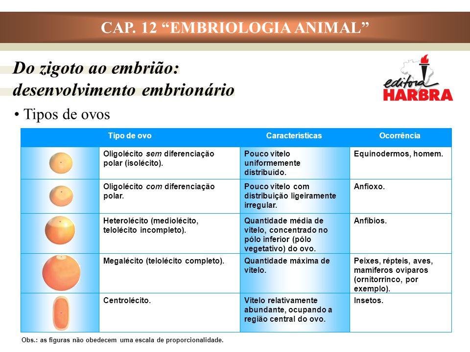 """CAP. 12 """"EMBRIOLOGIA ANIMAL"""" Tipos de ovos Insetos.Vitelo relativamente abundante, ocupando a região central do ovo. Centrolécito. Peixes, répteis, av"""