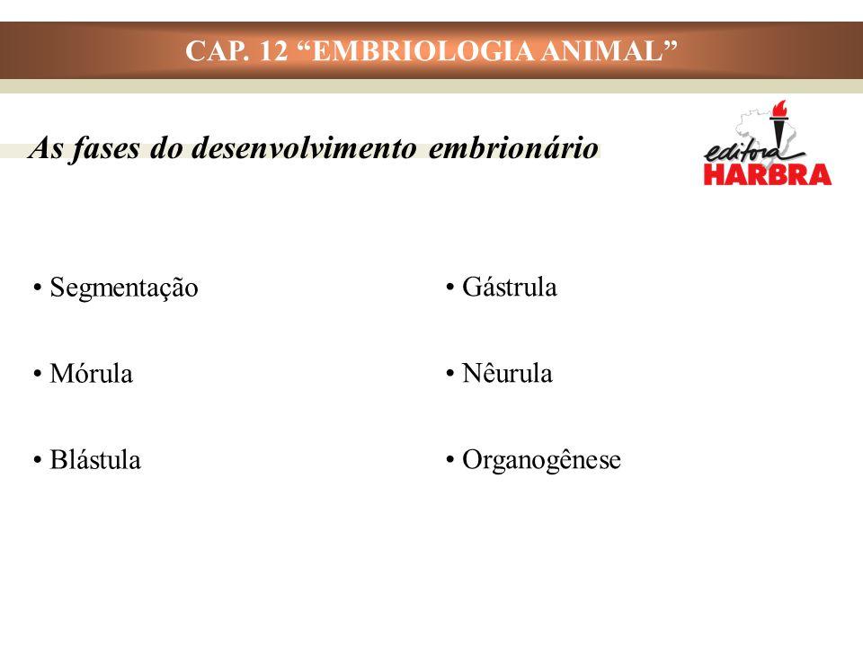 """CAP. 12 """"EMBRIOLOGIA ANIMAL"""" Segmentação Mórula Blástula As fases do desenvolvimento embrionário Gástrula Nêurula Organogênese"""