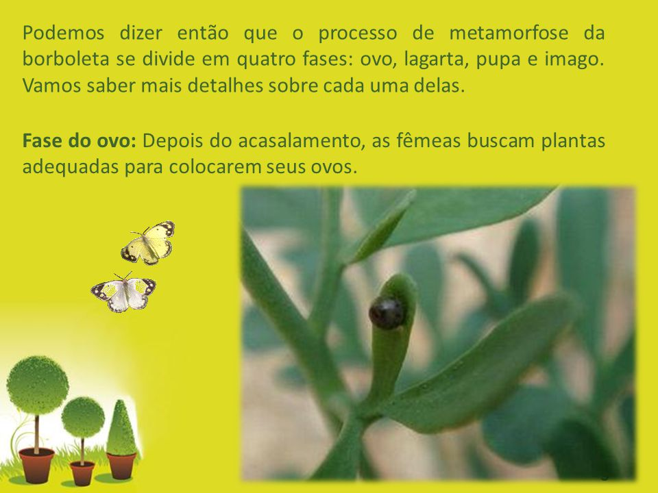 Powerpoint Templates Page 3 Podemos dizer então que o processo de metamorfose da borboleta se divide em quatro fases: ovo, lagarta, pupa e imago. Vamo