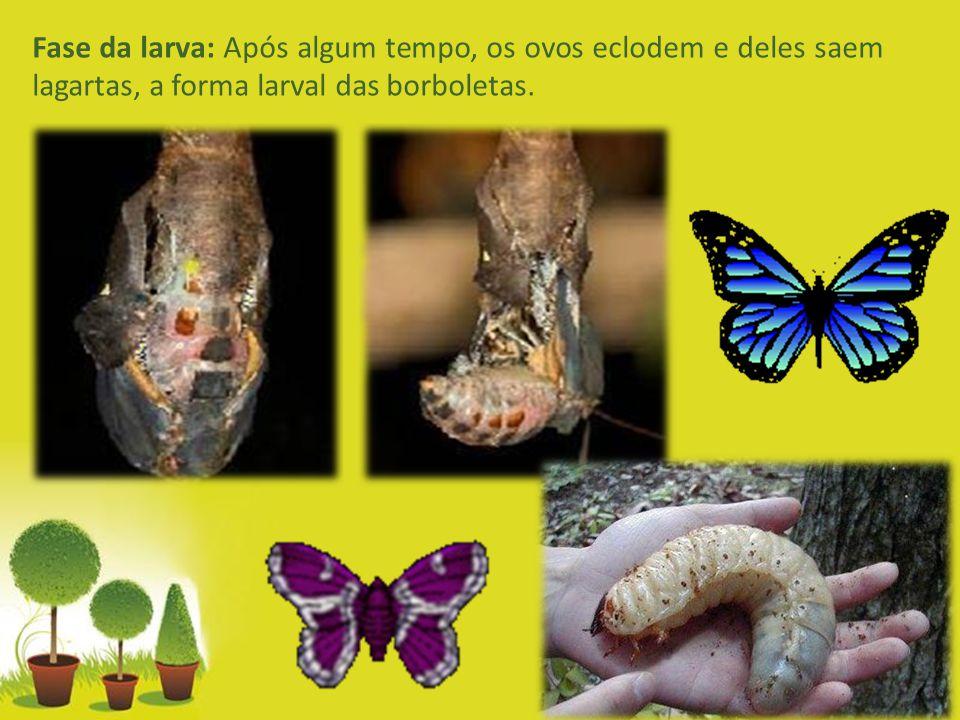 Powerpoint Templates Page 4 Fase da larva: Após algum tempo, os ovos eclodem e deles saem lagartas, a forma larval das borboletas.