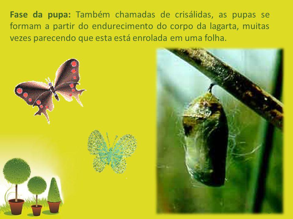Powerpoint Templates Page 5 Fase da pupa: Também chamadas de crisálidas, as pupas se formam a partir do endurecimento do corpo da lagarta, muitas veze