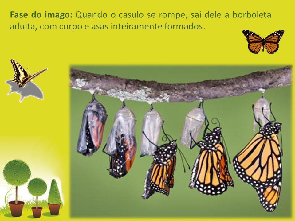 Powerpoint Templates Page 7 Minhoca - Informações Importantes:  As minhocas se alimentam de organismos animais mortos e diversos tipos de vegetação (plantas e folhas).