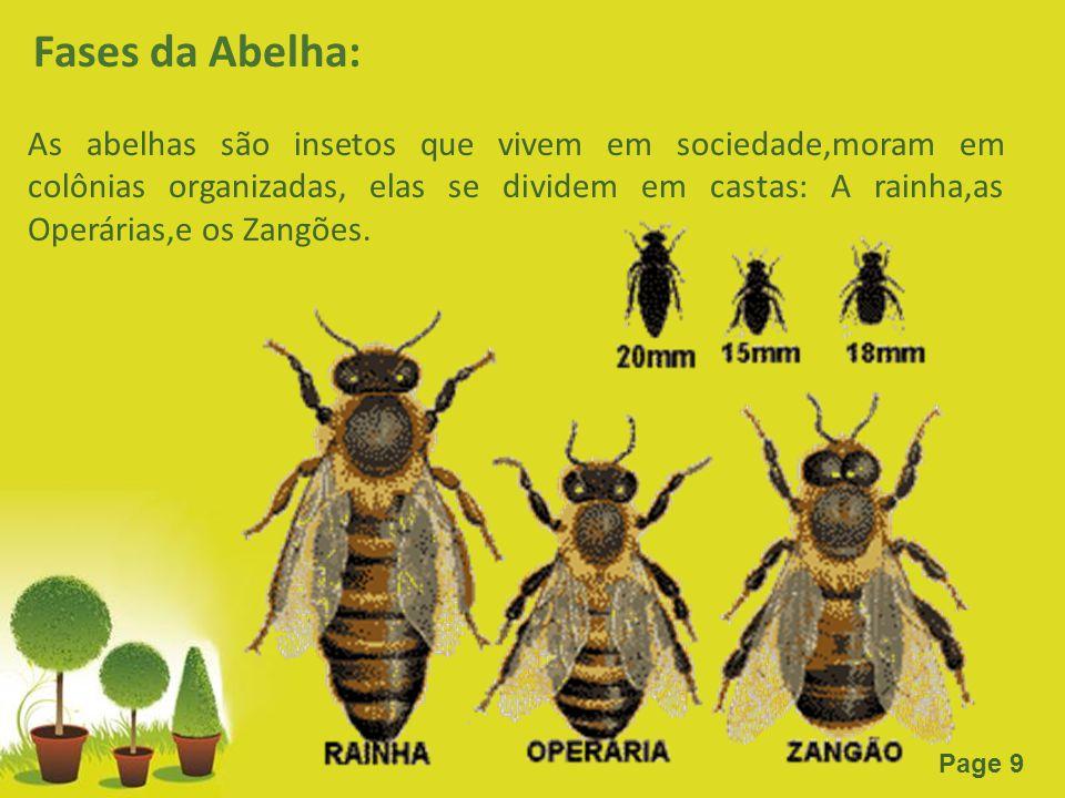 Powerpoint Templates Page 9 Fases da Abelha: As abelhas são insetos que vivem em sociedade,moram em colônias organizadas, elas se dividem em castas: A