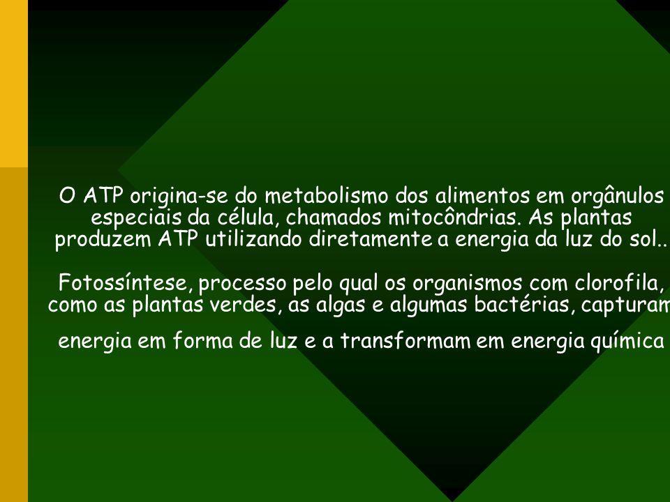O ATP origina-se do metabolismo dos alimentos em orgânulos especiais da célula, chamados mitocôndrias. As plantas produzem ATP utilizando diretamente