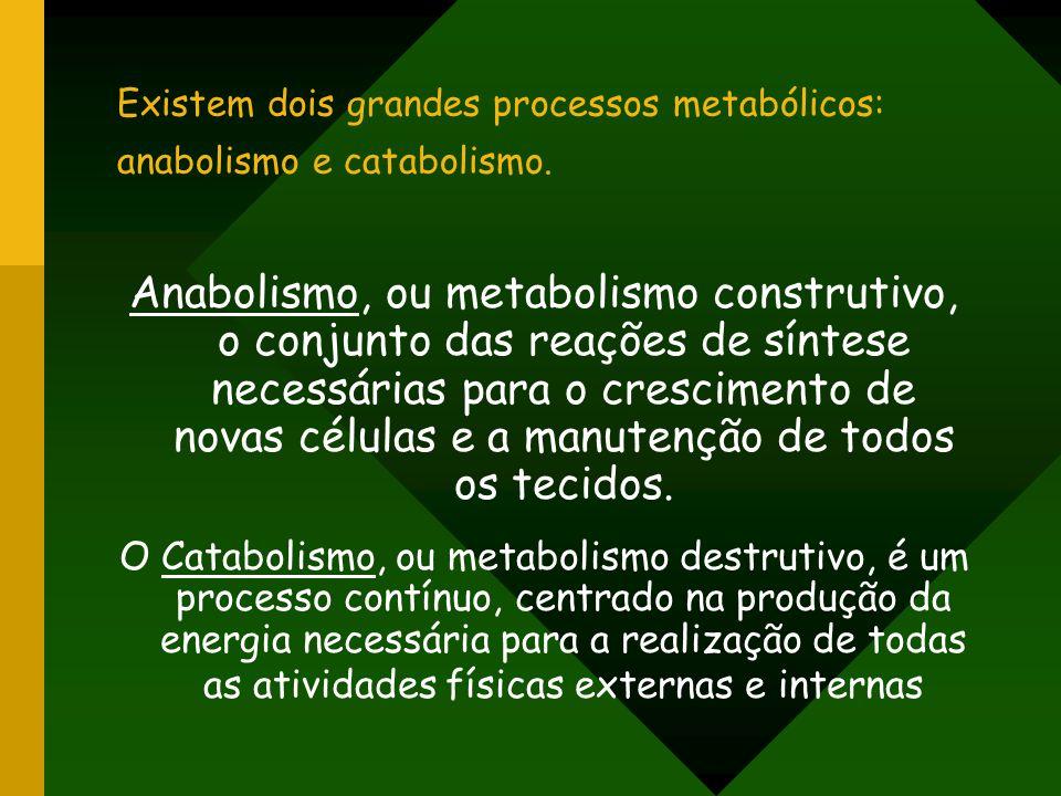 Existem dois grandes processos metabólicos: anabolismo e catabolismo. Anabolismo, ou metabolismo construtivo, o conjunto das reações de síntese necess