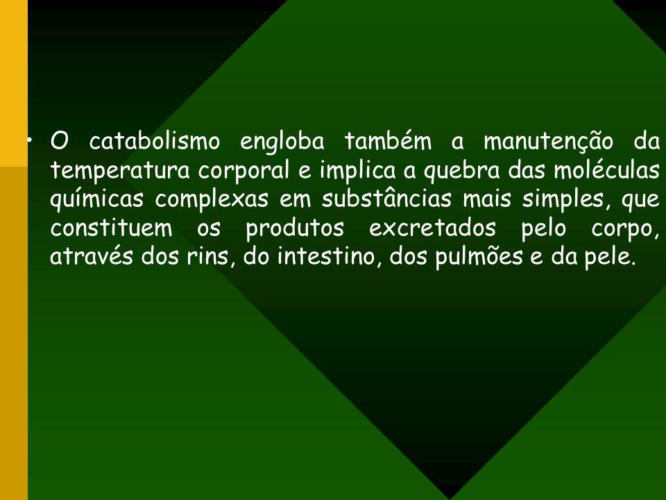 O catabolismo engloba também a manutenção da temperatura corporal e implica a quebra das moléculas químicas complexas em substâncias mais simples, que