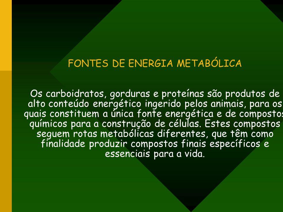 FONTES DE ENERGIA METABÓLICA Os carboidratos, gorduras e proteínas são produtos de alto conteúdo energético ingerido pelos animais, para os quais cons
