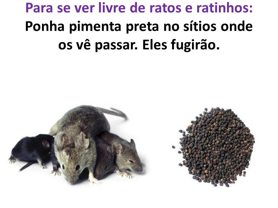 Para se ver livre de ratos e ratinhos: Ponha pimenta preta no sítios onde os vê passar.