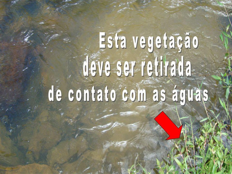 A SOLUÇÃO PARA ELIMINAR O BORRACHUDO É A LIMPEZA CONSTANTE DE RIOS E CORREGOS DE SUA PROPRIEDADE