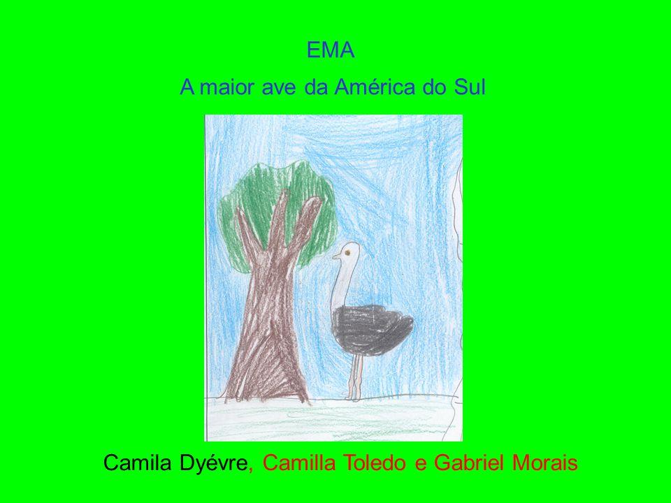 EMA A maior ave da América do Sul Camila Dyévre, Camilla Toledo e Gabriel Morais