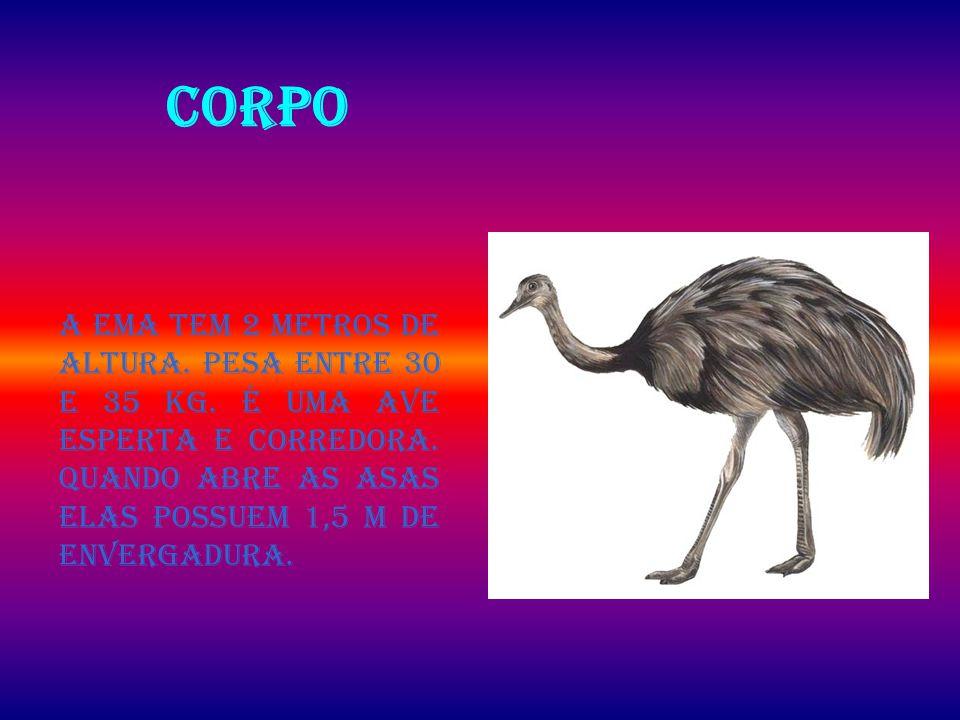 CORPO A ema tem 2 metros de altura.Pesa entre 30 e 35 kg.