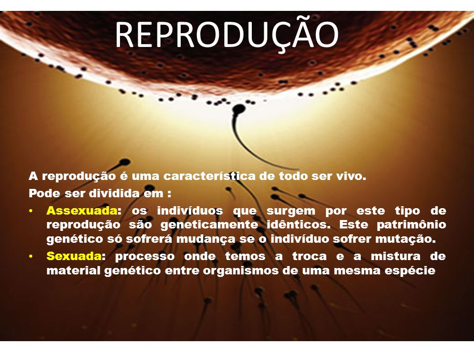 A reprodução é uma característica de todo ser vivo.