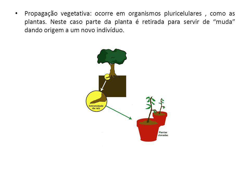 Propagação vegetativa: ocorre em organismos pluricelulares, como as plantas.