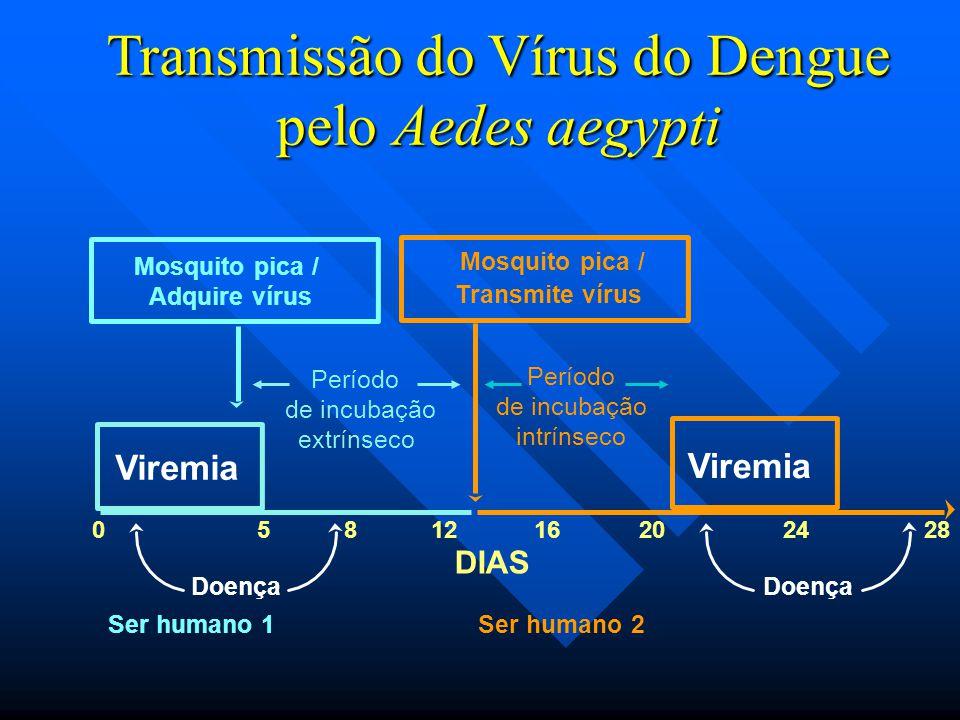 Transmissão do Vírus do Dengue pelo Aedes aegypti Viremia Período de incubação extrínseco DIAS 0581216202428 Ser humano 1Ser humano 2 Mosquito pica /