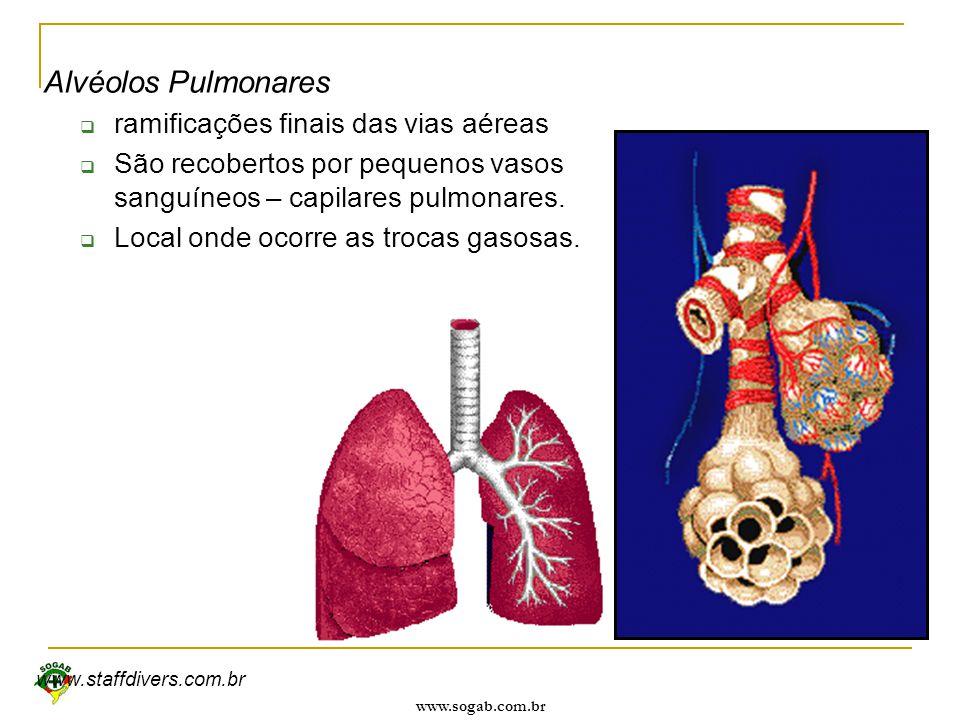 www.sogab.com.br Alvéolos Pulmonares  ramificações finais das vias aéreas  São recobertos por pequenos vasos sanguíneos – capilares pulmonares.  Lo