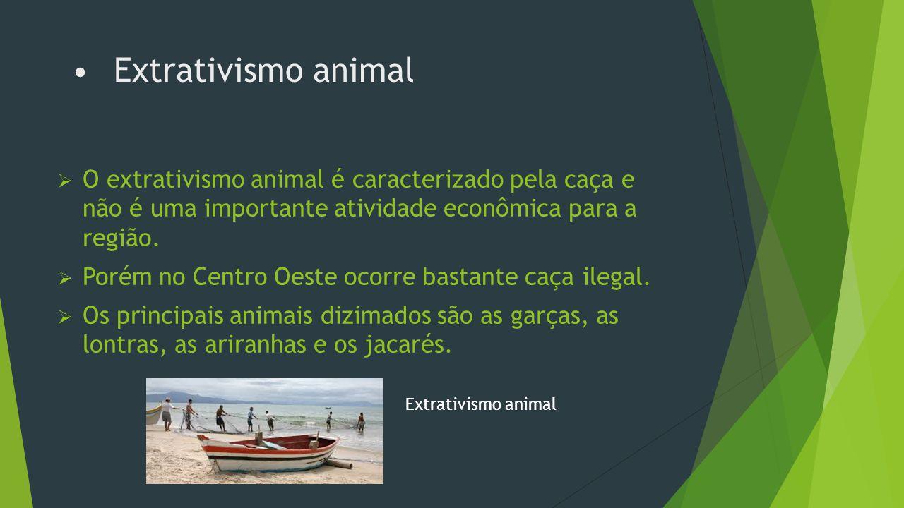 Pecuária  A pecuária é a atividade mais importante do Centro Oeste.