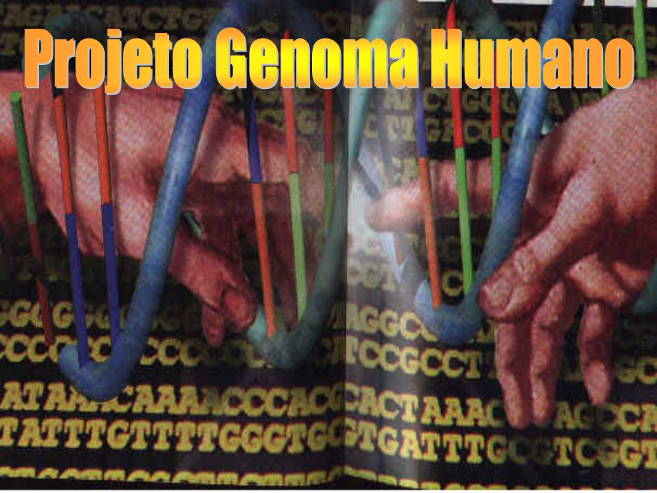  Mapeamento  Sequenciamento  Etapas do Sequenciamento COMO É FEITO O SEQUENCIAMENTO 1.Picotando o DNA 2.Clonagem 3.Marcação com Fluorencência 4.Separação 5.Leitura