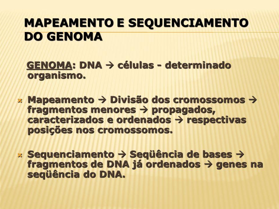 SEQUENCIAMENTO DOS GENES É cada vez maior o esforço dos cientistas para colocar à disposição um número crescente de genomas inteiros sequenciados dos mais diferentes organismos.