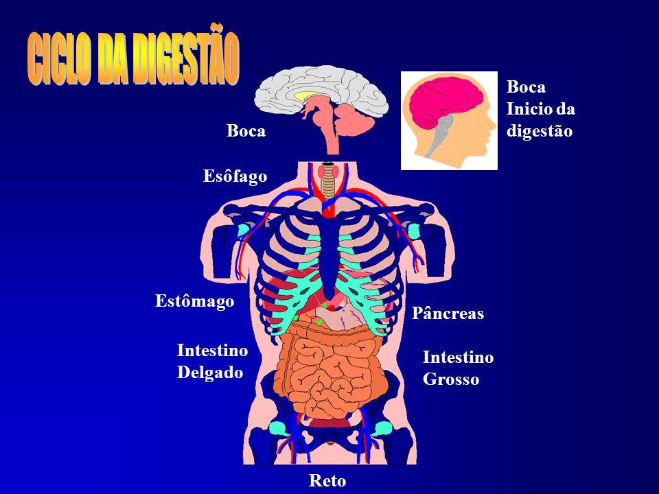 Quando vai iniciar a digestão dos alimentos o pilôro fecha (válvula que temos na saída do estômago).