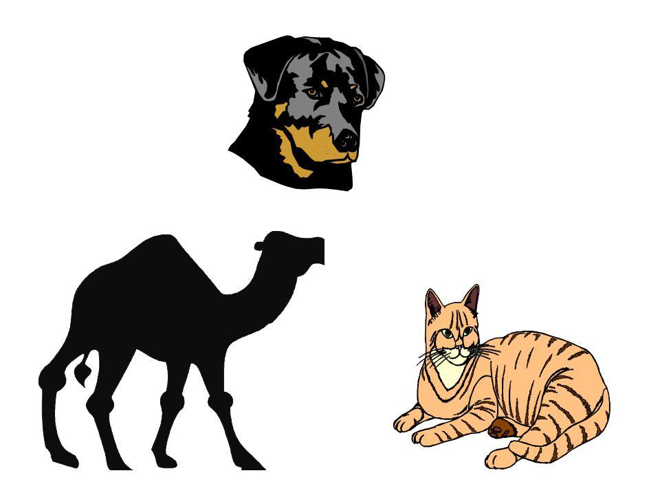 """""""Destes, porém, não comereis; dos que ruminam ou dos que têm unhas fendidas; o camelo, que rumina, mas não tem unhas fendidas; esse vos será imundo;"""""""