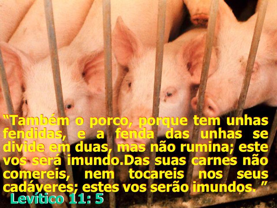 """""""E o coelho, porque rumina, mas não tem as unhas fendidas; esse vos será imundo; """" Levítico 11: 5 Levítico 11: 5"""