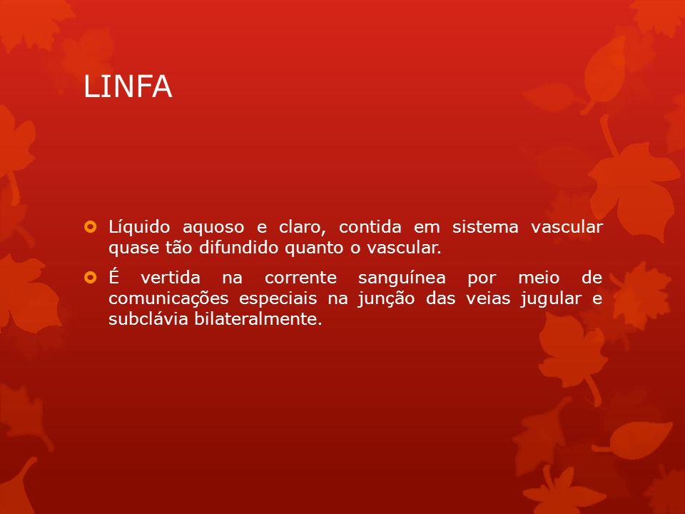 LINFA  Líquido aquoso e claro, contida em sistema vascular quase tão difundido quanto o vascular.