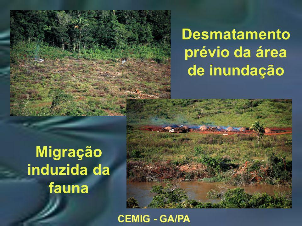 CEMIG - GA/PA Desmatamento prévio da área de inundação Migração induzida da fauna