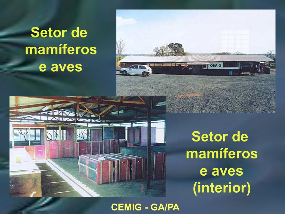 CEMIG - GA/PA Setor de mamíferos e aves Setor de mamíferos e aves (interior)