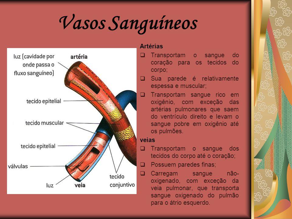 Vasos Sanguíneos  Sãos estruturas com formato semelhante ao de tubos que transportam o sangue pelo corpo;  O corpo humano possui diversos vasos sang