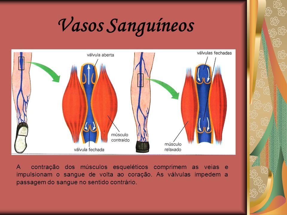 Vasos Sanguíneos Capilares  São vasos sanguíneos microscópicos que unem as arteríolas e as vênulas.  Esses vasos estão presentes em quase todos os t