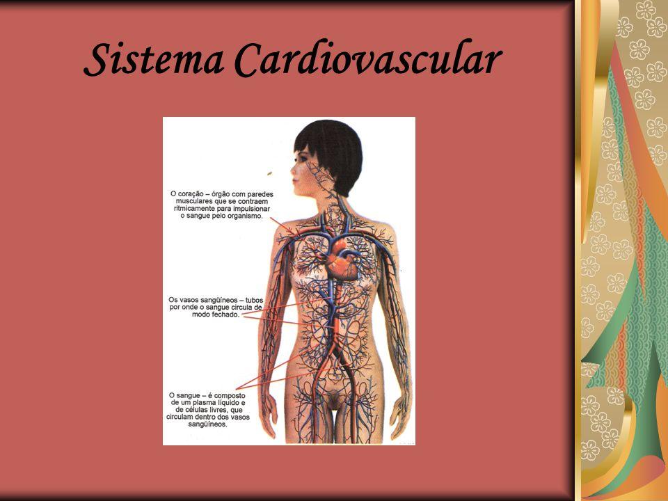 Sistema Cardiovascular Professoras: Ana Laura, Edilene e Janaina