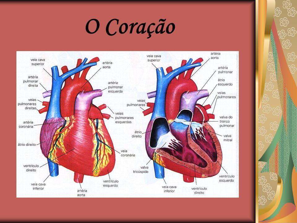 A Circulação Esquema simplificado da circulação, vista geral do coração e alguns vasos que saem desse órgão.