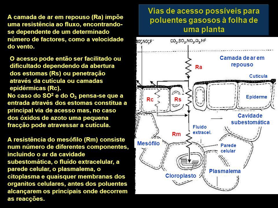 Vias de acesso possíveis para poluentes gasosos à folha de uma planta Mesófilo Cloroplasto Plasmalema Parede celular Cavidade subestomática Fluído extracel.